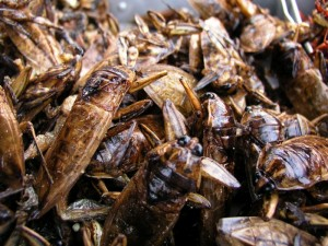9  Setting a record on the most number of cockroaches eaten