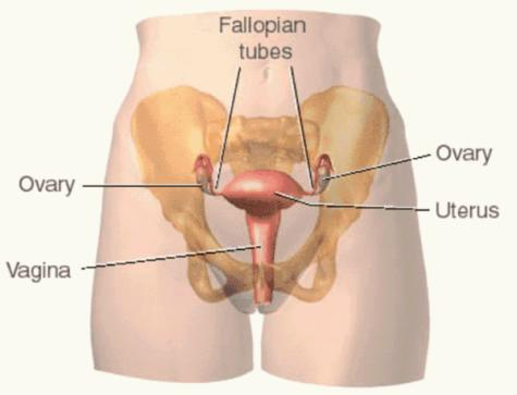 Top 10 Useful Insights on the Anatomy of the Vagina Every Woman (and Man) Needs to Know